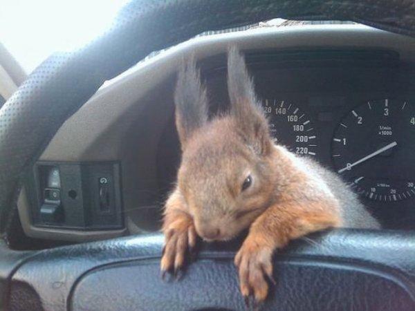L'écureuil ( trop beau )