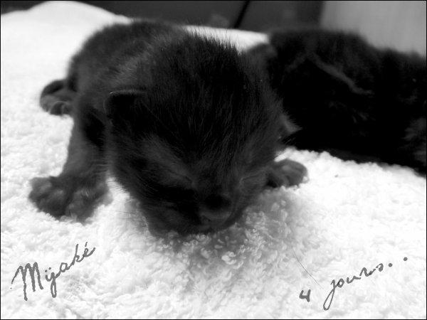 24/03/2012 :: 4 Minis Panthères♥