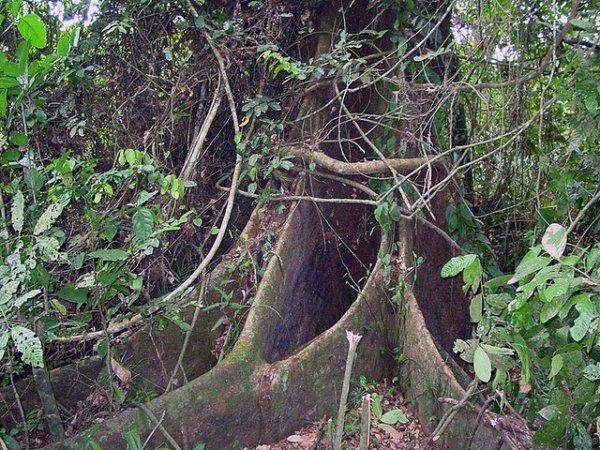 BELLES  PHOTOS  : PAYSAGE    DE  FORETS  EN  COTE  D IVOIRE