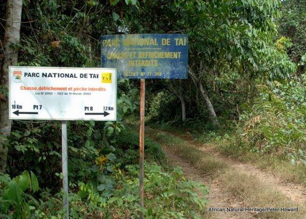 """Résultat de recherche d'images pour """"parc national de Taï"""""""