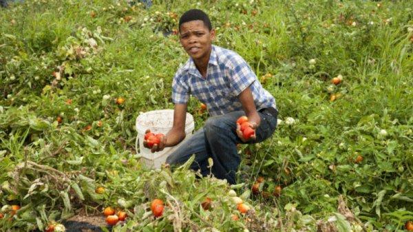 «30 millions de jeunes arrivent sur le marché du travail en Afrique tous les ans»
