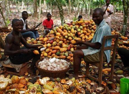 Les trois pays africains qui exportent 70% du cacao mondial bénéficient seulement de 3% des revenus