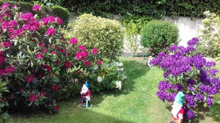 je vous fait partager mon jardin