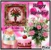 joyeux anniversaire begonia 520