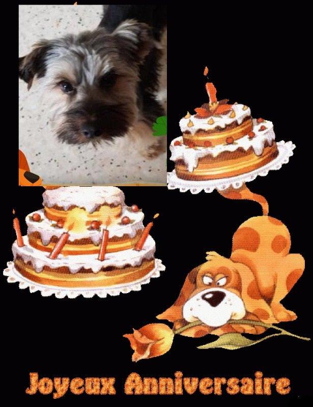 joyeux anniversaire a nemo petit chien de mon amie tinon