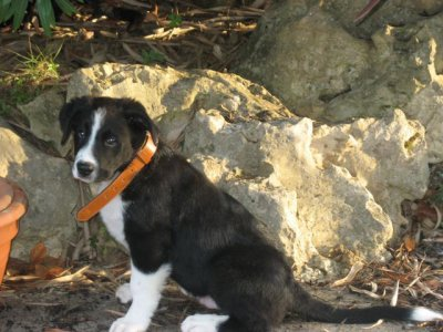 """Demandez-moi ce qu'est la définition d'un chien, d'un vrai. Je vous répondrais ce mot la : """"Balto""""."""