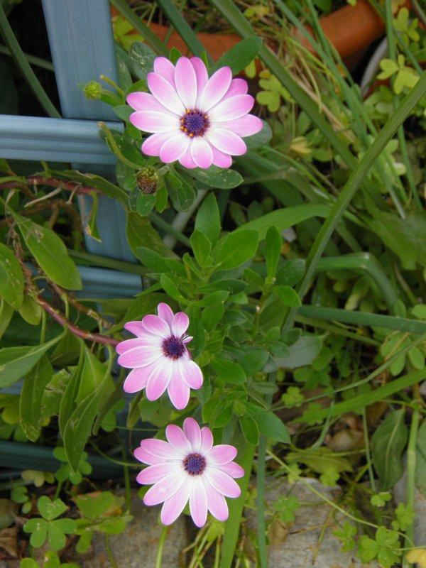 Encore des fleurs !!!