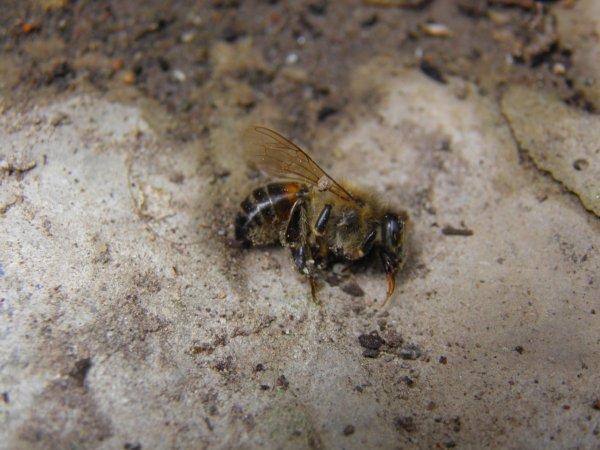 Insectes vivants et mort...