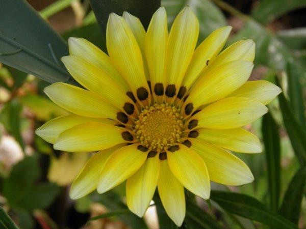 Fleurs 30.05.2012