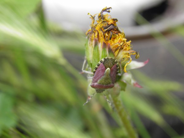 Insectes 10.06.2012