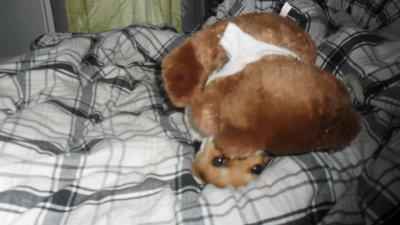 mon chien : chipie