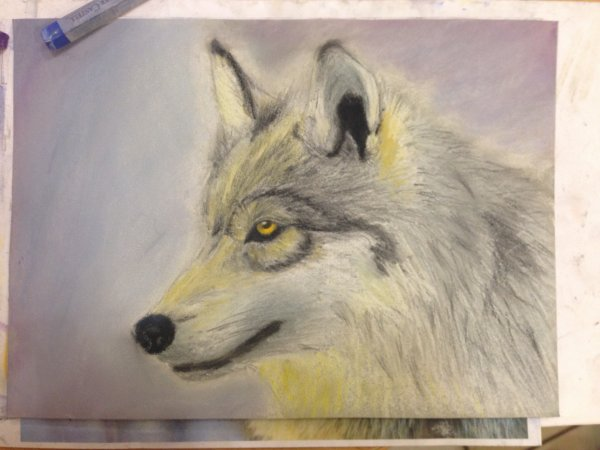 Loup au pastel
