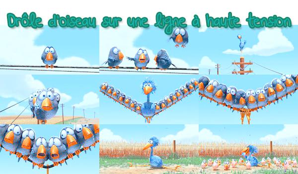 Drôles d'Oiseaux sur une Ligne à Haute Tension - Fiche de film ● ● ● ● ● ● ● ● ● ● ● ● ● ● ● ● ● ● ● ● ● ● ● ● ● ● ● ● ● ● ● ● ● ● ● ●