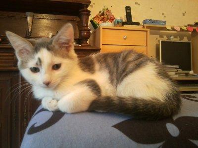V*nd chaton (fille) , 3 mois , se prénomant Nahele , Enchères començant a 0,30 centimes.