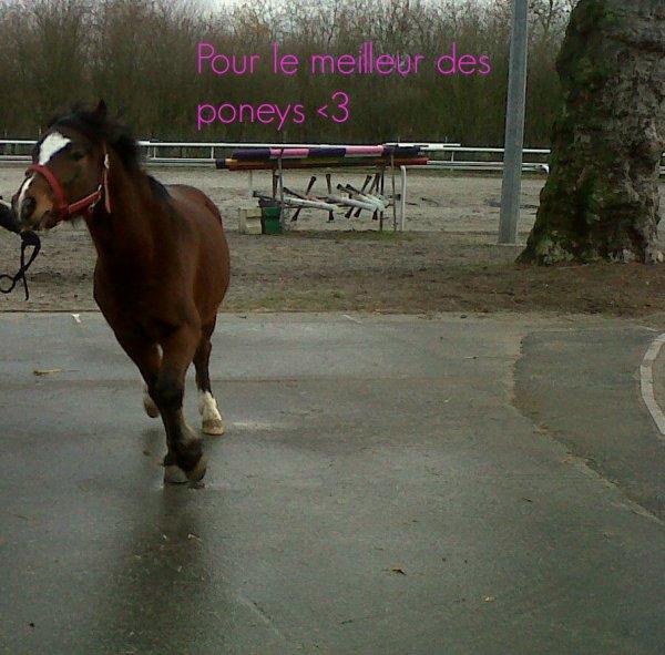 Mon poney préféré