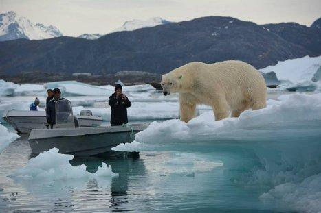 Un ours qui se demande ce que fond ces touristes là
