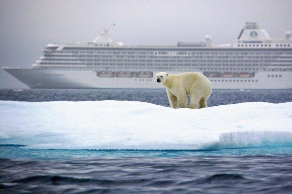 Un ours qui se demande ce que fait ce bateau là