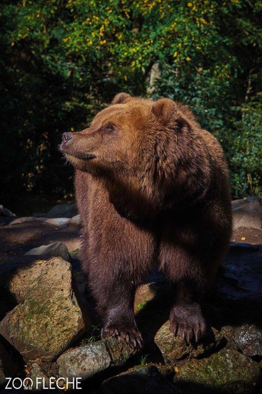 Un bel ours