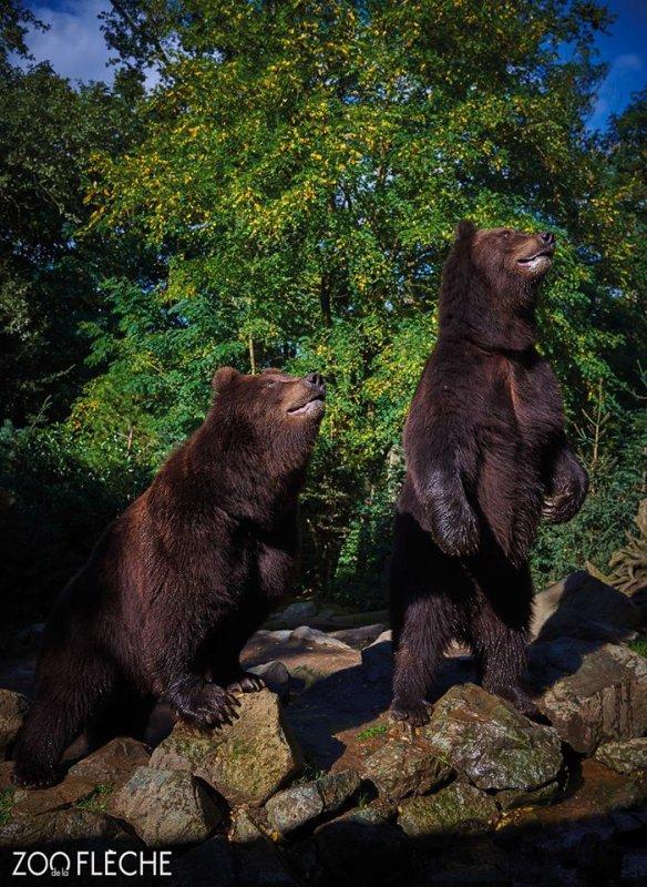 Deux beaux ours