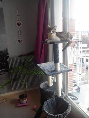 bonjour    dsl    pour  ce retard   j ai  emménagée     depuis   3 semaines  beaucoup    de  choses  a   faire   .dasko   a  eut   un  coup   de  blouse   et    on a  un  nouveau   pensionnaire    le  chat   de     mon copain     nous  somme  a  15 mn  de la mer    et   je  vois  la   mer   de mon  balcon    trop  cool    je  paserais   bientot    gros  bisous  a   tous     flo