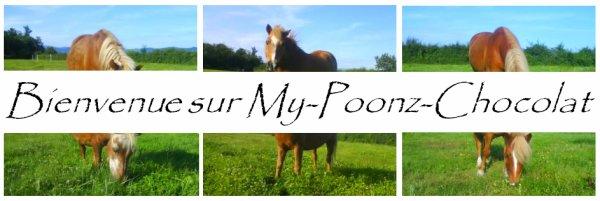 → Welcome (: ! « Lance ton coeur par dessus l'obstacle et ton cheval suivra »