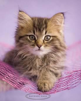 Ho  le petit chaton