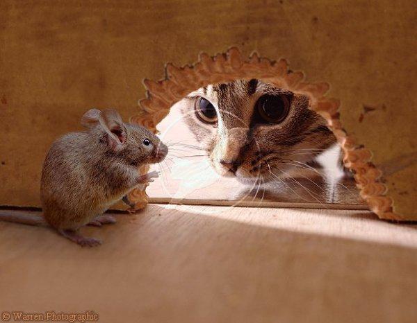 gaspard et son ami speedy