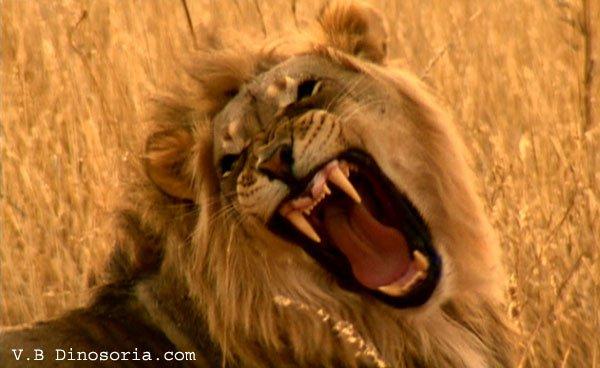 JEUNESSE DU TOGO, JEUNESSE LION, RUGISSONS POUR EXPLOSER LA CARAVANE RPT-UNIR QUI NE TREMBLE PAS AUX ABOIEMENTS DES CHIENS.