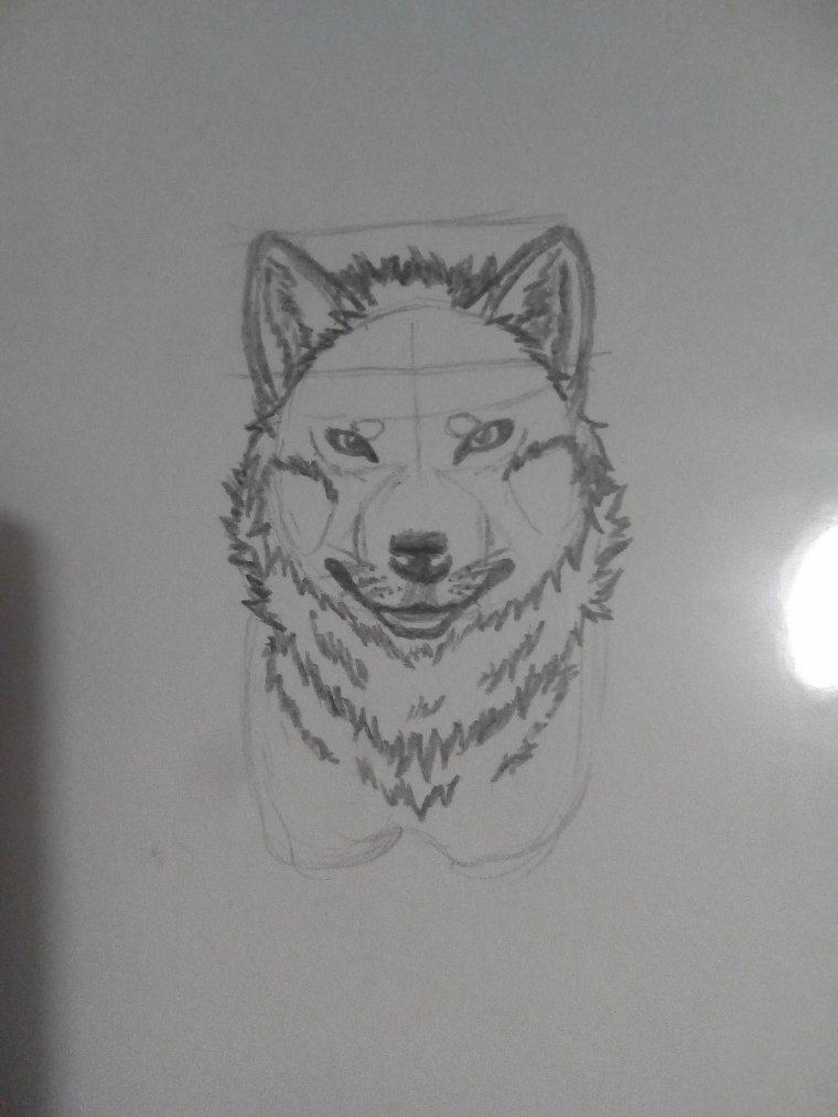 Croquis d'un loup en réaliste !
