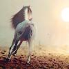 Portrait-Equin