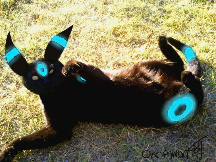 DESSIN36: Quand mon chat devient un pokémon...