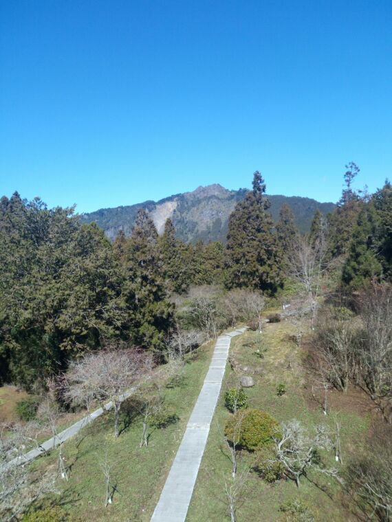 Taiwan : Alishan parc naturel