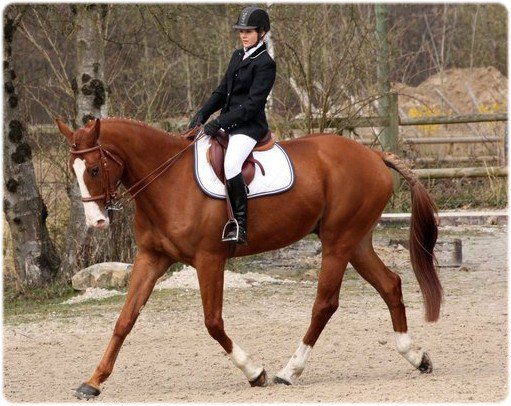 Un cheval vraiment complet ...