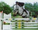 Photo de xx3-cheval-xx3