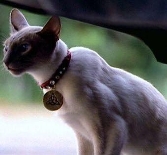 Charmed s'invite sur Téva.