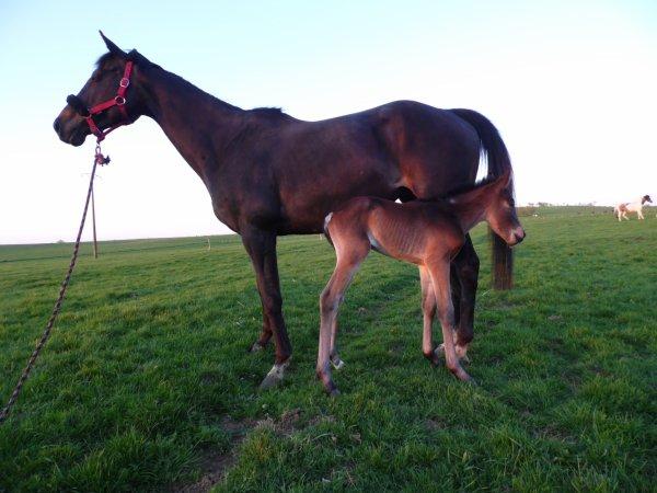 Diva d'amour le nouveau bébé ♥♥♥♥