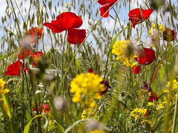 passionne  de fleurs