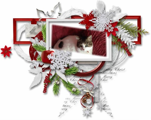 Minou Vous Souhait Un Joyaux Noel 2013