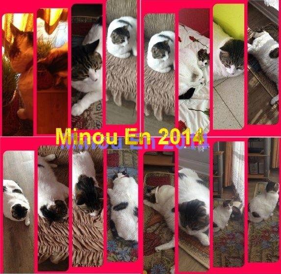 Minou 10 Ans 3 Mois Et 14 Jours