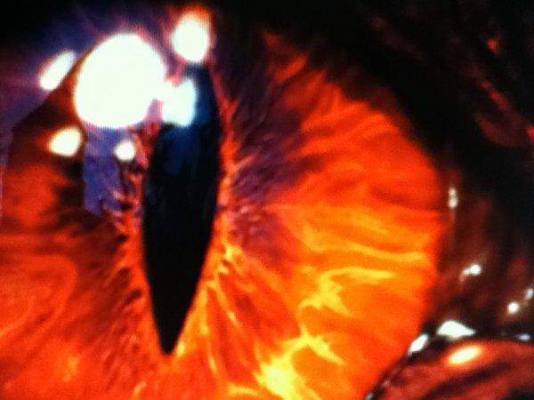 L'oeil du dragon:ces dans l'oeil du dragon que reside tout son pouvoir de seduction