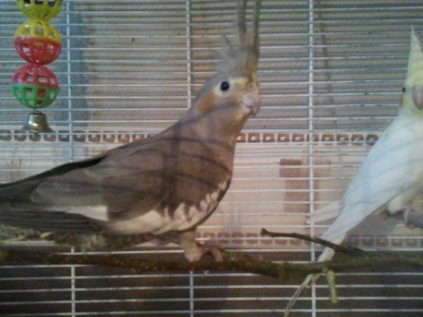 Les oiseaux qui ont suivit =)