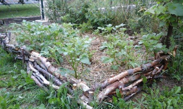dans mon jardin ma petite permaculture