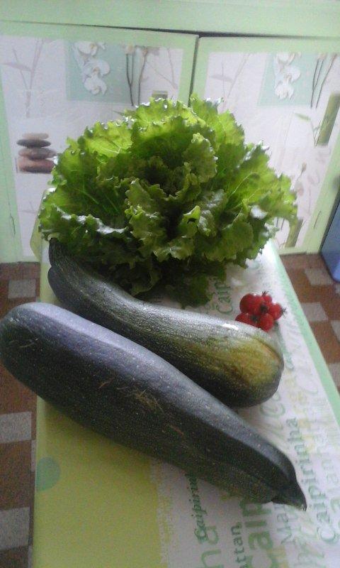 la recolte du jardin