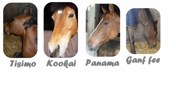 Présentation des chevaux.(2)