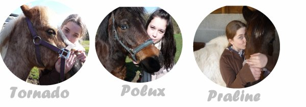 Présentation des poneys.