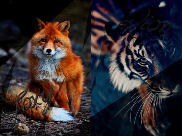 LUL'S MODE : FOXY OR LION ?!?!?!!