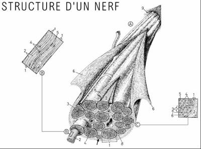 Nerf---------------->structure - Ze Boubou's life in his new