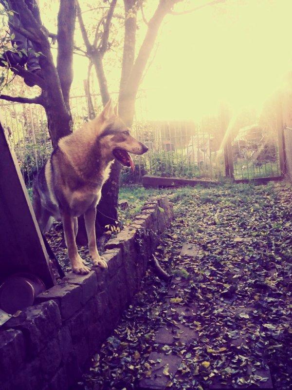 Mon loup! :D