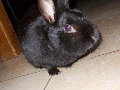 mon petit lapinou