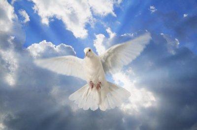La porteuse de paix